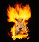 Images Burning Money
